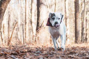 fall dog photo shoot