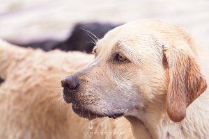 raleigh pet photographer