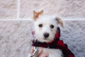 terrier puppy help animal rescues