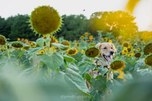 sunflower pet photo shoot doretha dix park