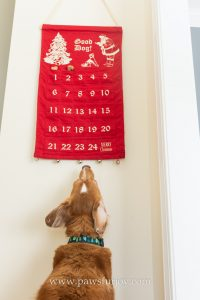 dog advent calendar gifts for pet parents