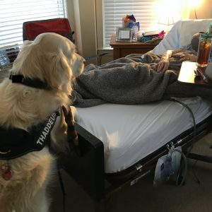 therapy dog in action